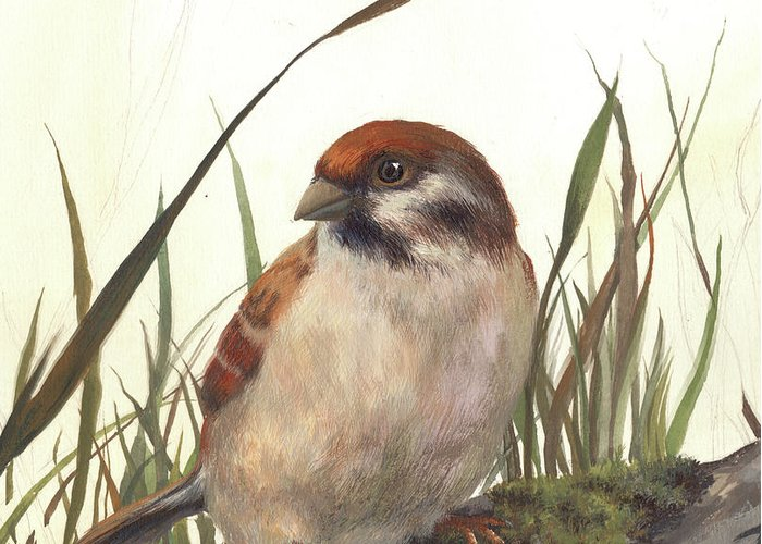 Sparrow Greeting Card featuring the drawing Sparrow by CHOI Haejung