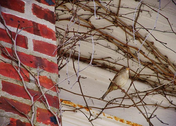Sparrow Greeting Card featuring the photograph Sparrow by JAMART Photography