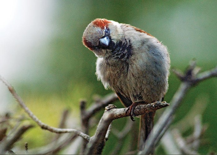 Humor Greeting Card featuring the photograph Sparrow Puzzled At What It Sees by Steve Somerville