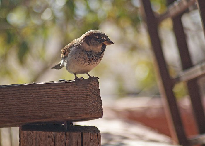 Sparrow Greeting Card featuring the photograph Sparrow. by Robert Rodda