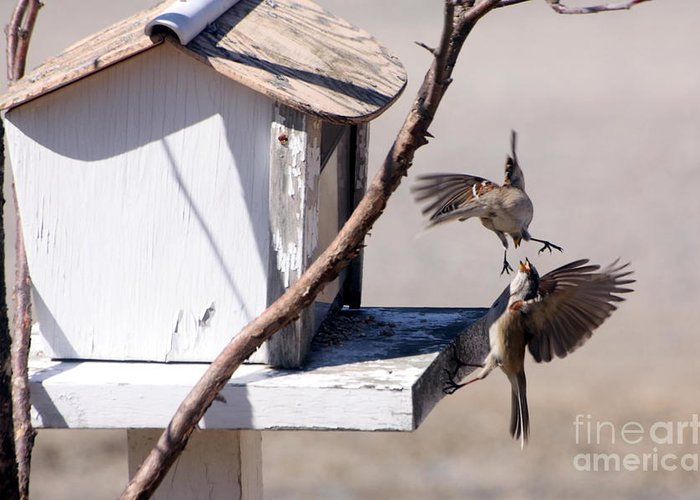 Bird Greeting Card featuring the photograph Sparrows In Fight by Marjorie Imbeau
