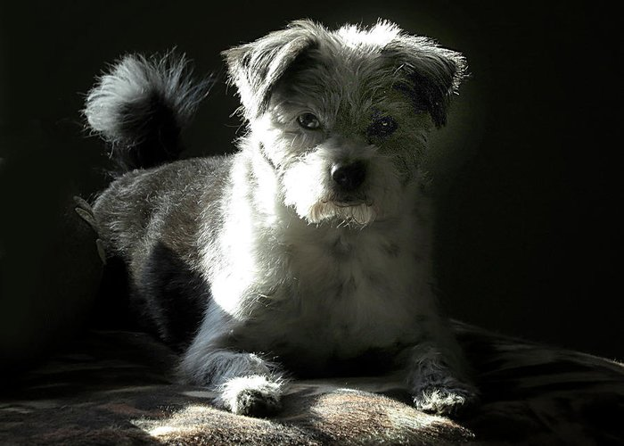 Dog Greeting Card featuring the photograph Speckles in Sunlight by Linda A Waterhouse