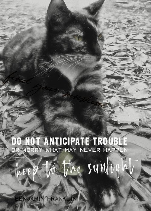 Cat Greeting Card featuring the photograph Sphinx Quote by JAMART Photography