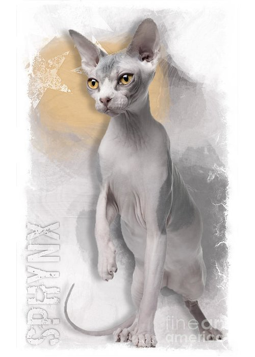 Sphynx Greeting Card featuring the digital art Sphynx No 04 by Maria Astedt