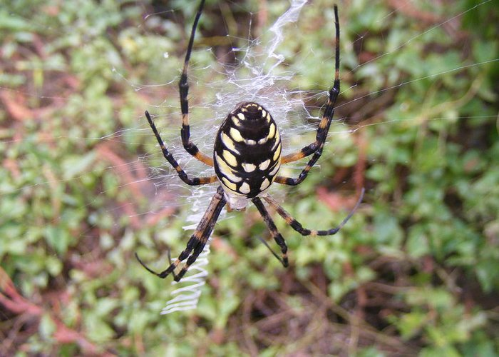 Spider Greeting Card featuring the photograph Spider by Dorion McFadden