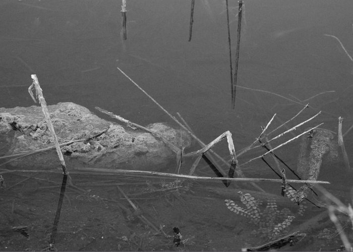 Black And White Greeting Card featuring the photograph Spider In Water by Rob Hans