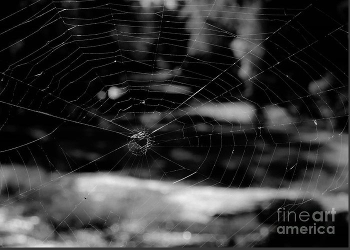 Nature Greeting Card featuring the photograph Spider Web Black White by Andrea Anderegg