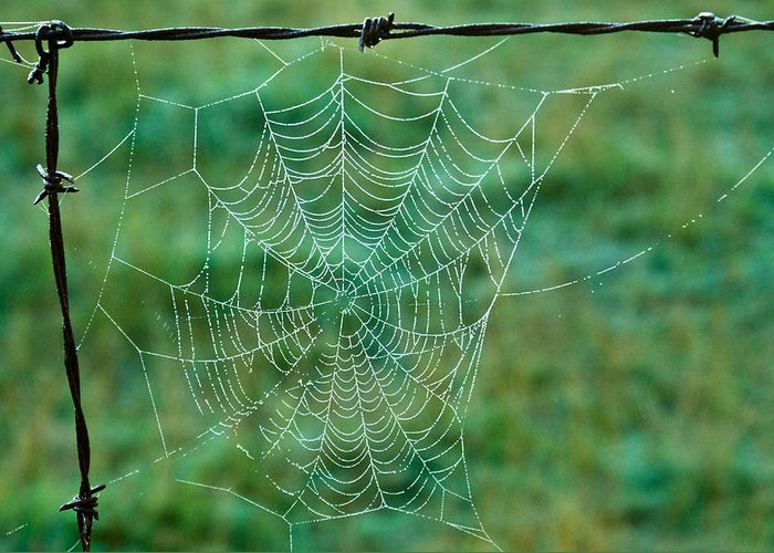 Spider Greeting Card featuring the photograph Spider Web In The Springtime by Douglas Barnett