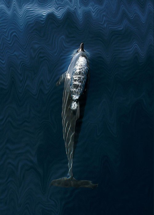 Scenic Greeting Card featuring the photograph Spinner Dolphin by Lita Kishbaugh