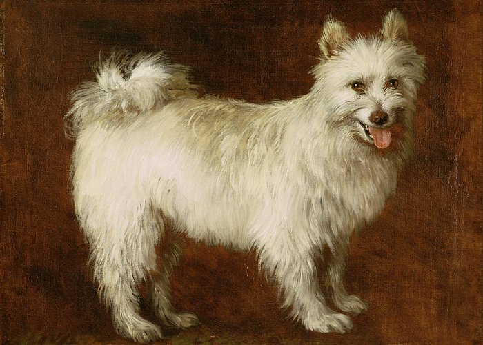 Spitz Greeting Card featuring the painting Spitz Dog by Thomas Gainsborough