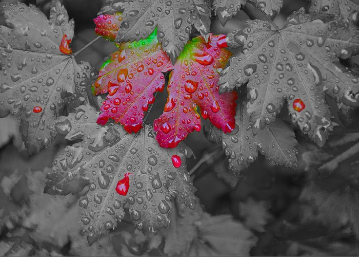 Hand Coloring Greeting Card featuring the photograph Splash Of Color by Noah Cole