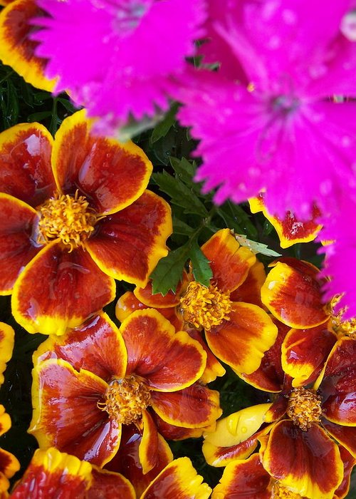 Flowers Greeting Card featuring the photograph Splash Of Color by Vijay Sharon Govender
