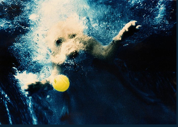 Dog Greeting Card featuring the photograph Splashdown by Jill Reger