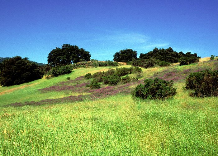 Landscapes Greeting Card featuring the photograph Splendor In The Grass by Kathy Yates