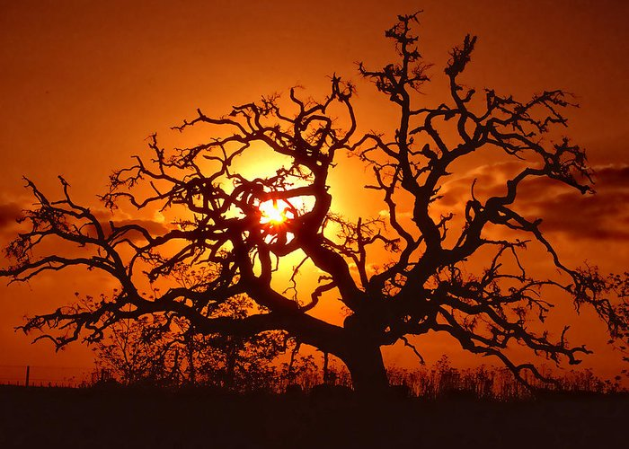 Spooky Greeting Card featuring the photograph Spooky Tree by Stephen Anderson
