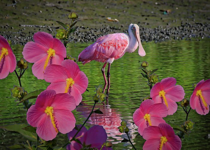 Spoonbill Greeting Card featuring the photograph Spoonbill Through The Flowers by TJ Baccari