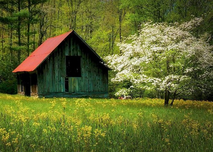 Blue Ridge Mountains Greeting Card featuring the photograph Spring and the Barn by Zayne Diamond Photographic