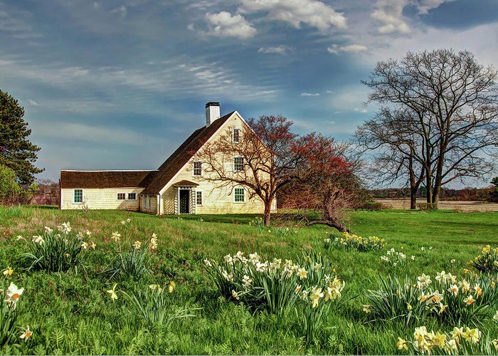 Spring Daffodils Paine House Ipswich Massachusetts Greenwood Farm Colonial First Period New England Saltbox First Period Greeting Card featuring the photograph Spring At The Paine House by Wayne Marshall Chase