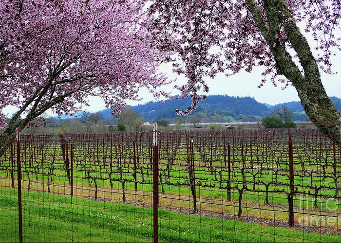 Calistoga Greeting Card featuring the photograph Spring Blossoms Near Calistoga by Charlene Mitchell