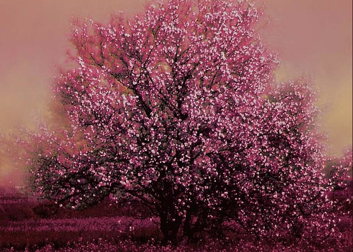 Blooming Tree Greeting Card featuring the photograph Spring Bounty by KaFra Art