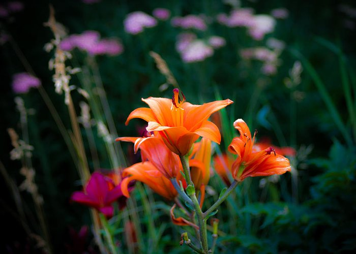 Orange Flowers Greeting Card featuring the photograph Spring Flowers by Sherri Barrett