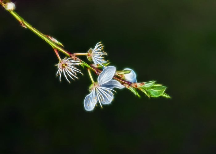 Nature Greeting Card featuring the photograph Spring by Lee Houston