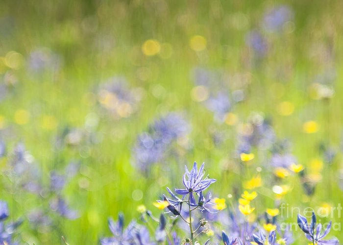 Wildflowers Greeting Card featuring the photograph Spring Meadow 3 by Jill Greenaway