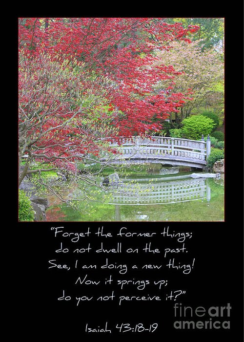 Isaiah 43: 18-19 Greeting Card featuring the photograph Spring Revival by Carol Groenen
