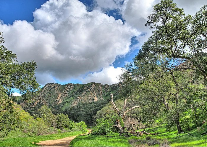 Canyons Greeting Card featuring the photograph Spring Trail In The Canyon by Lynn Bauer