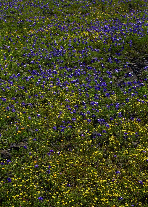Wildflowers Greeting Card featuring the photograph Spring Wildflowers by Garry Gay