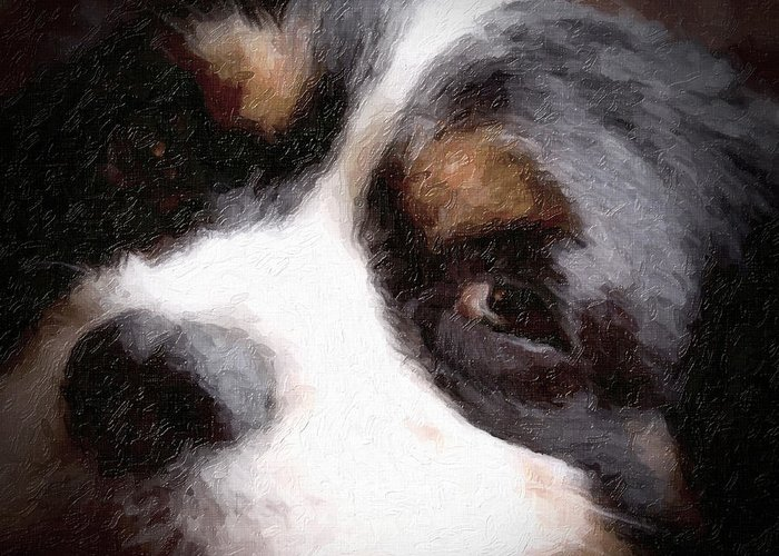 Dog Greeting Card featuring the photograph Springer Spaniel by Tom Mc Nemar