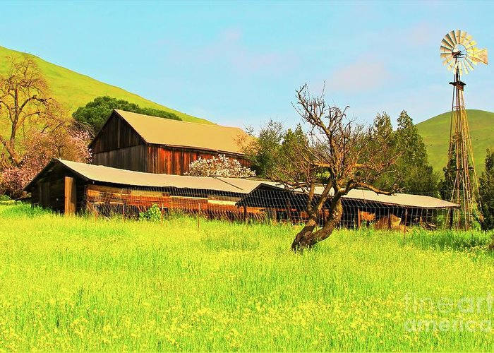 Farm Greeting Card featuring the photograph Springtime Barn San Francisco Bay by Gus McCrea