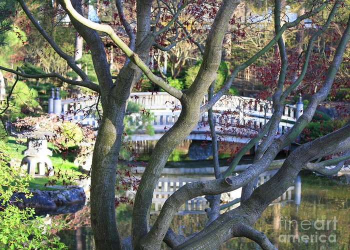 Japanese Garden Greeting Card featuring the photograph Springtime Bridge Through Japanese Maple Tree by Carol Groenen