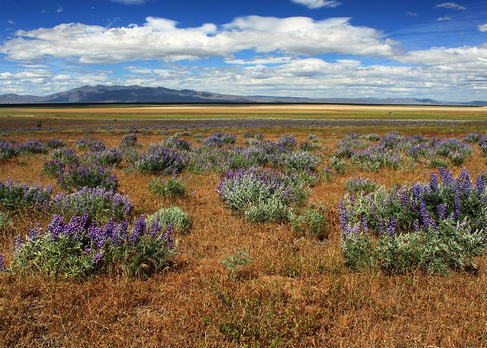 Landscape Greeting Card featuring the photograph Springtime In Honey Lake Valley by James Eddy