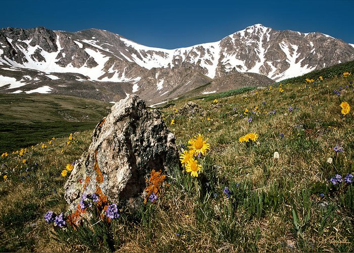 Colorado Greeting Card featuring the photograph Springtime In The Rockies by Joe Bonita
