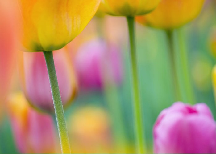Flowers Greeting Card featuring the photograph Springtime by Silke Magino