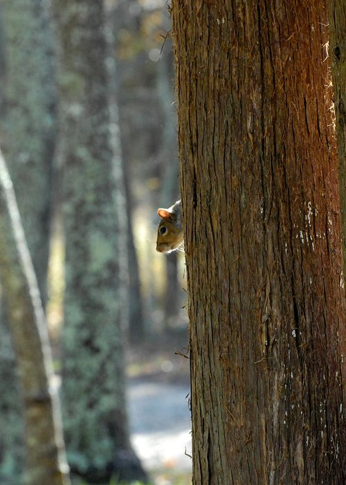 Squirrel Photographs Greeting Card featuring the photograph Squirrel 4 by Joyce StJames