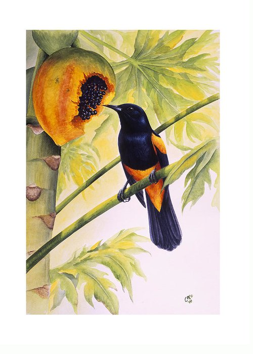 Chris Cox Greeting Card featuring the painting St. Lucia Oriole And Papaya by Christopher Cox