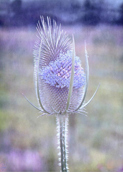 Thistle Greeting Card featuring the digital art Stand Alone by Margaret Hormann Bfa