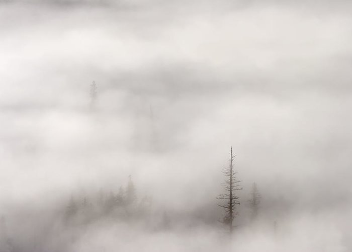 A Few Tall Trees Standing Tall Among The Rising Mist And Fog Of A Crisp October Morning In Th Wenatchee National Forest In Washington Greeting Card featuring the photograph Standing Tall by Mike Dawson