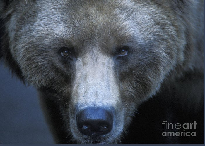 Yellowstone Greeting Card featuring the photograph Stare Down by Sandra Bronstein
