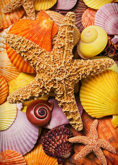Starfish Greeting Card featuring the photograph Starfish And Seashells by Garry Gay