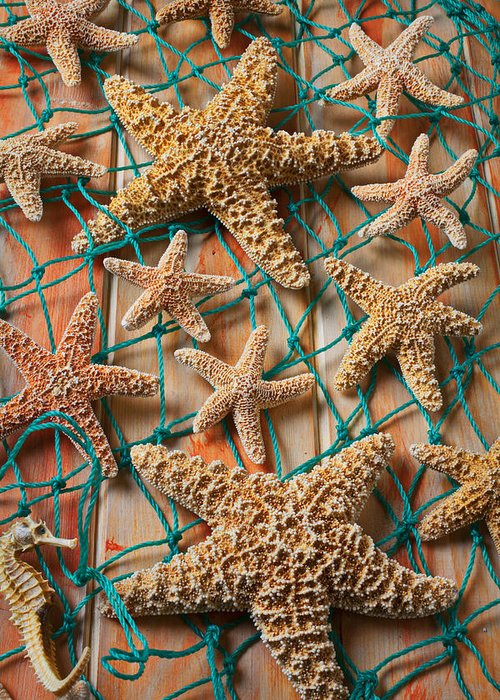 Echinoderm Greeting Cards