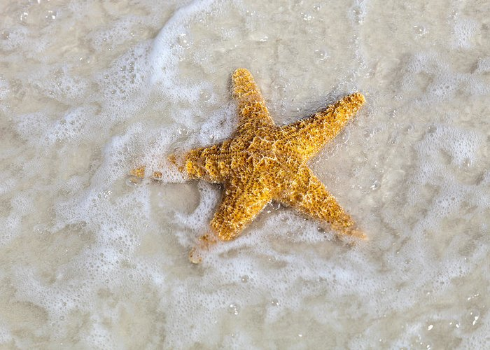 Starfish Greeting Card featuring the photograph Starfish by Janet Fikar