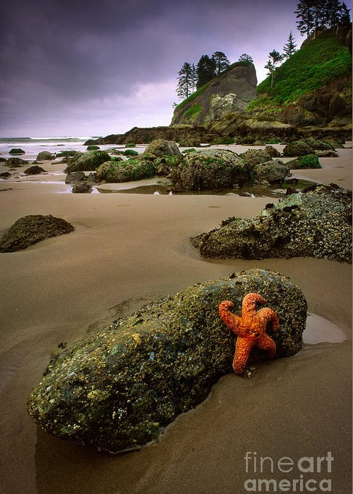 America Greeting Card featuring the photograph Starfish On The Rocks by Inge Johnsson