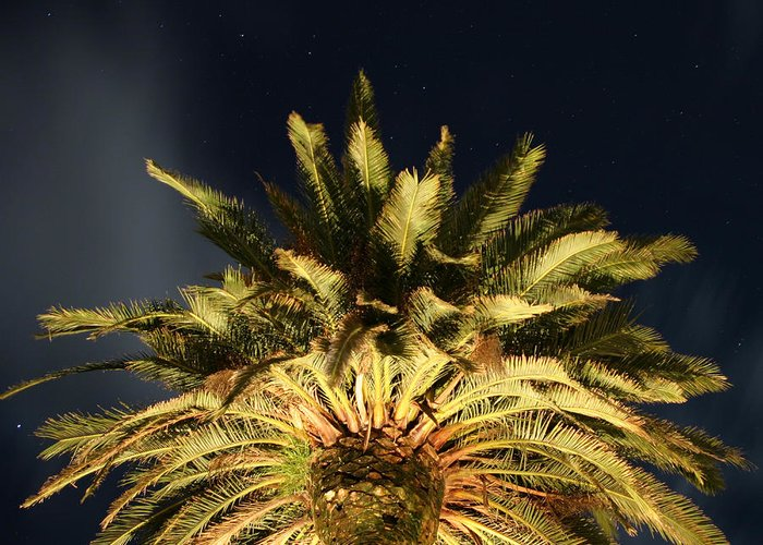 Palm Tree Greeting Card featuring the photograph Starry Sky by Brian Middleton