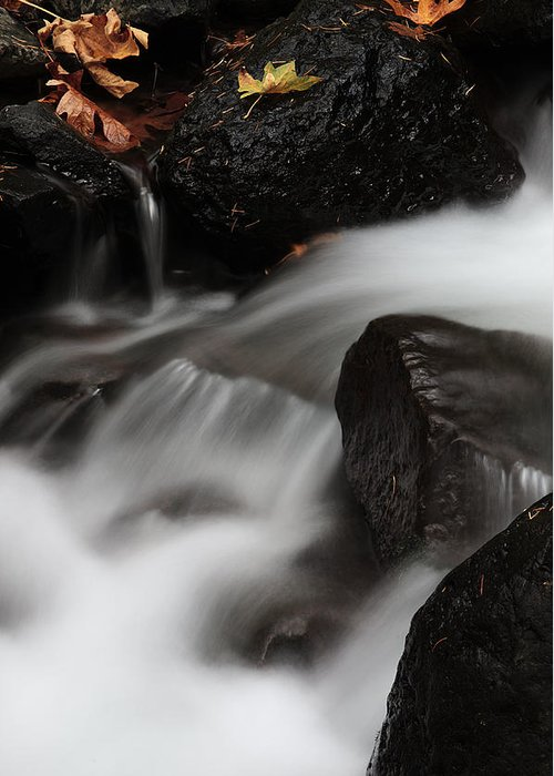 Waterfall Greeting Card featuring the photograph Everybody's Watching by Ken Dietz