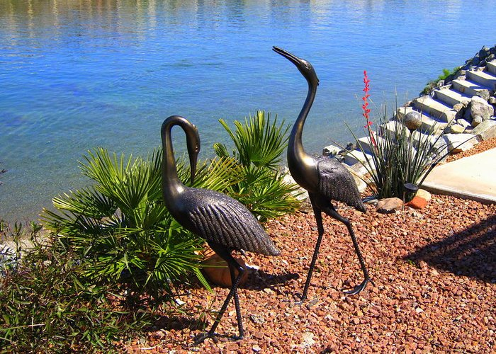 Cranes Greeting Card featuring the photograph Statueque Cranes by Lessandra Grimley
