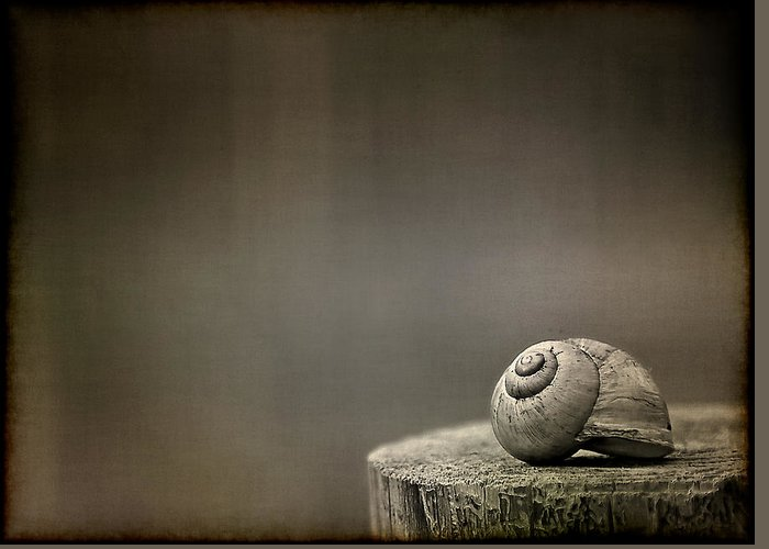 Snail Greeting Card featuring the photograph Stay by Evelina Kremsdorf