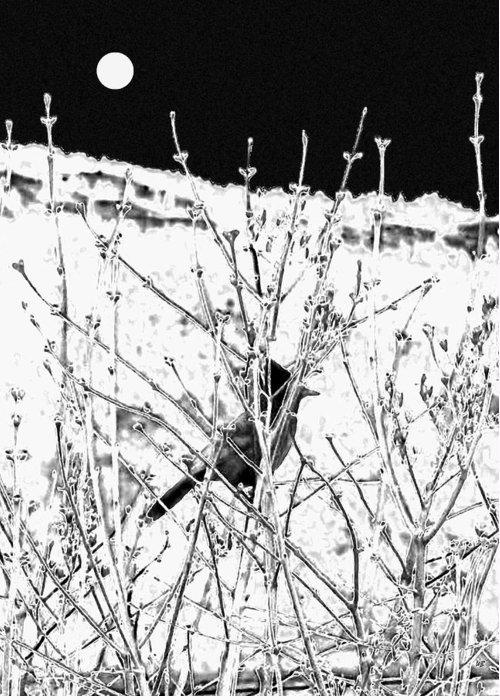 . Bird. Stellar Jay. Winter. Snow Greeting Cards